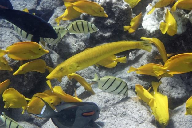 yellowcigar91b